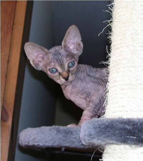 5 month old kitten behavior